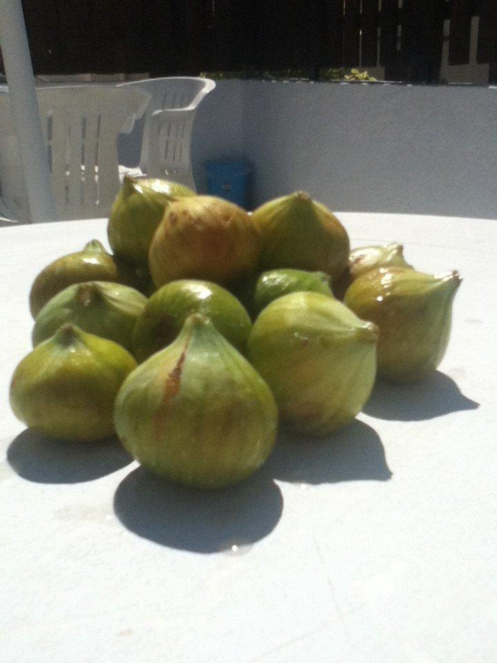 Figs in Rhodes