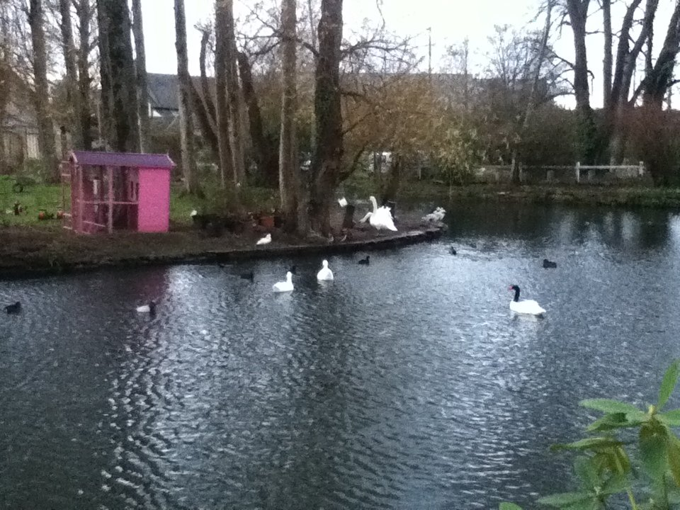 The feathered residents of Chateau de Bellefontaine, Bayeux - vegan in Normandy