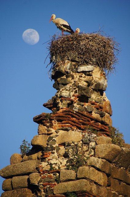 Vegan travel in Mérida - storks on the aqueduct