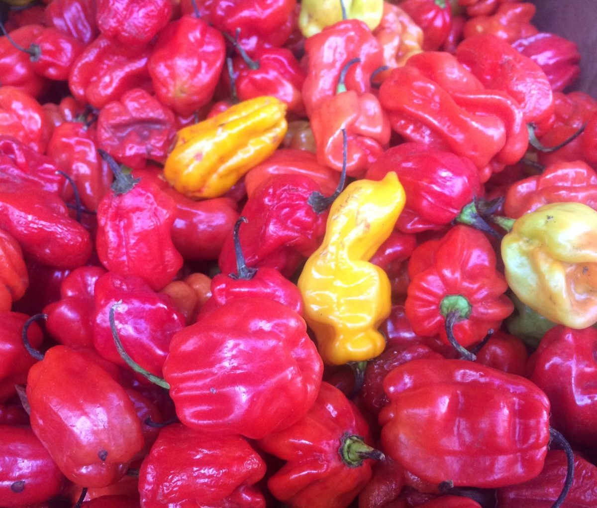 Pili pili peppers - vegan travel in the Congo (DRC)