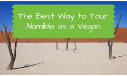Tour of Namibia as a Vegan