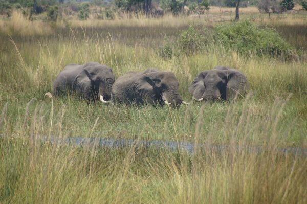 elephants in reeds - vegan guide