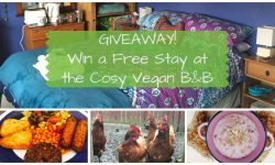Giveaway - Win a Free Stay at the Cosy Vegan B&B