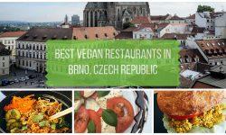 Vegan Brno Restaurant Dining Guide
