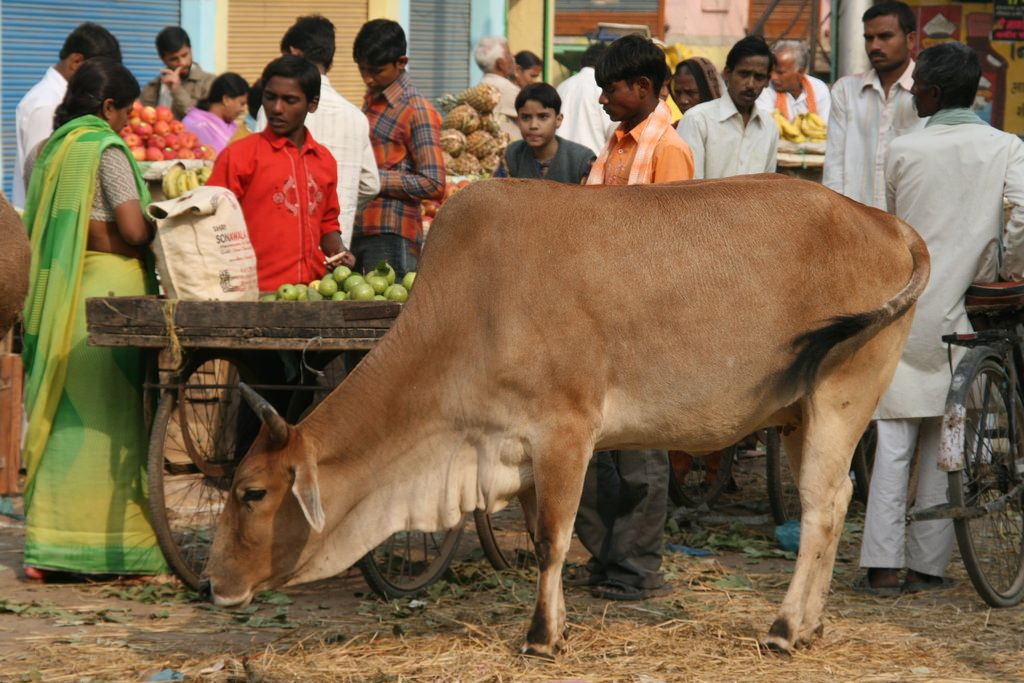 Indian market in Varanasi with cows - veganism in India