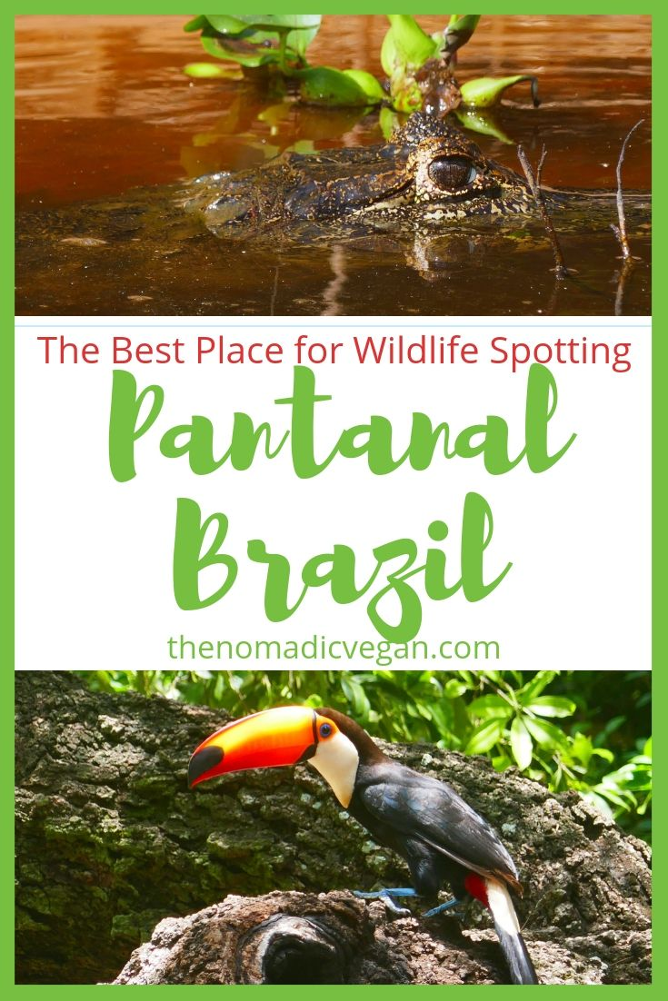 The Pantanal of Brazil - The Best Wildlife Spotting in the Country