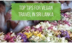 Top Tips for Vegan Sri Lanka Travel