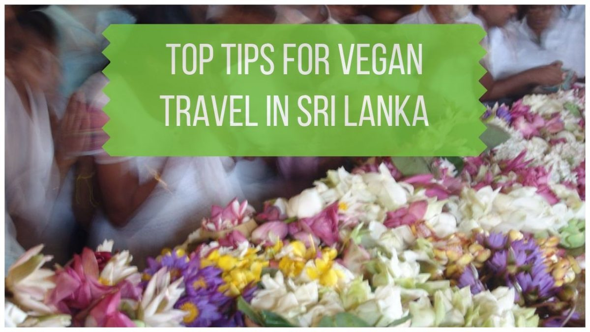 Top Tips for Vegan Sri Lanka Travel