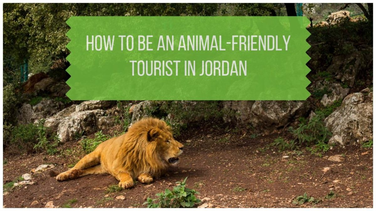 How to Be an Animal-Friendly Tourist in Jordan