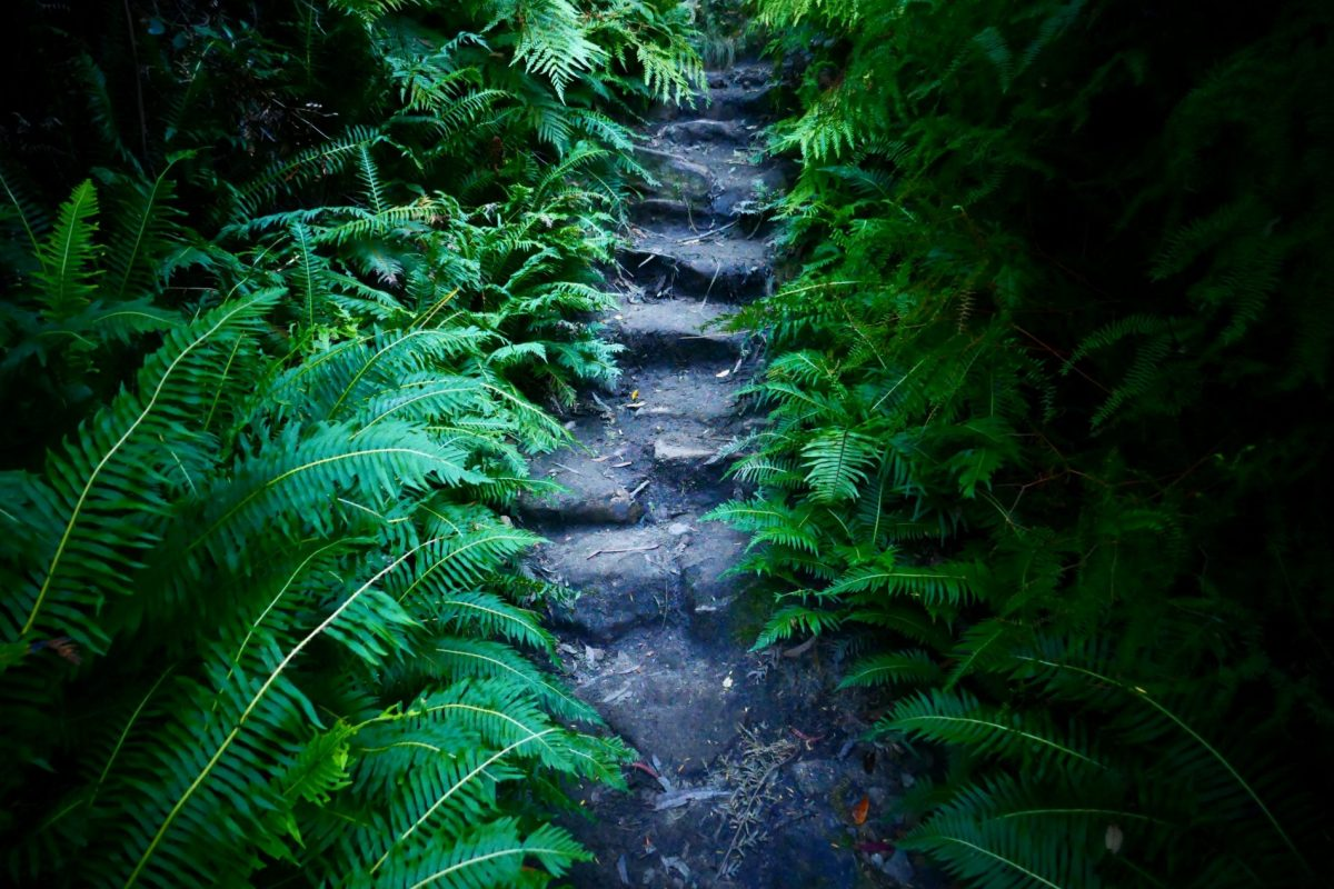 Hiking trail in the Blue Mountains of Australia