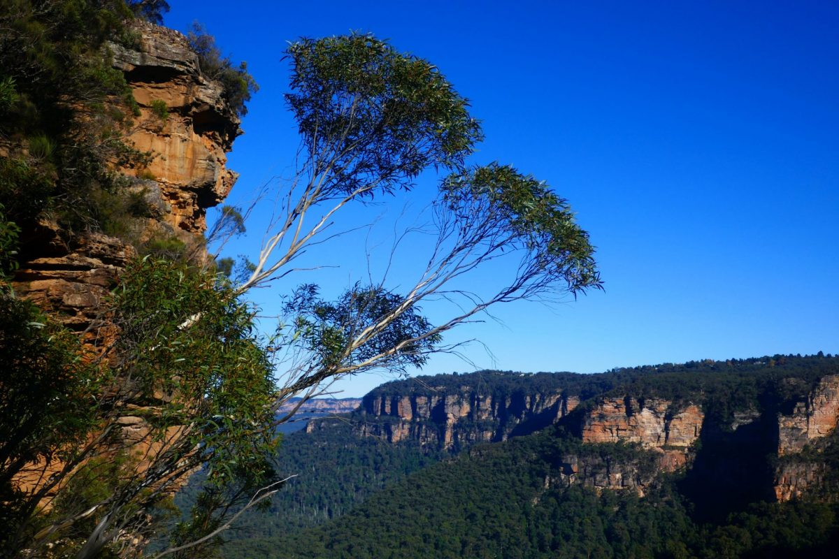 Early morning view of the Jamison Valley from the National Pass trail near Wentworth Falls in the Blue Mountains