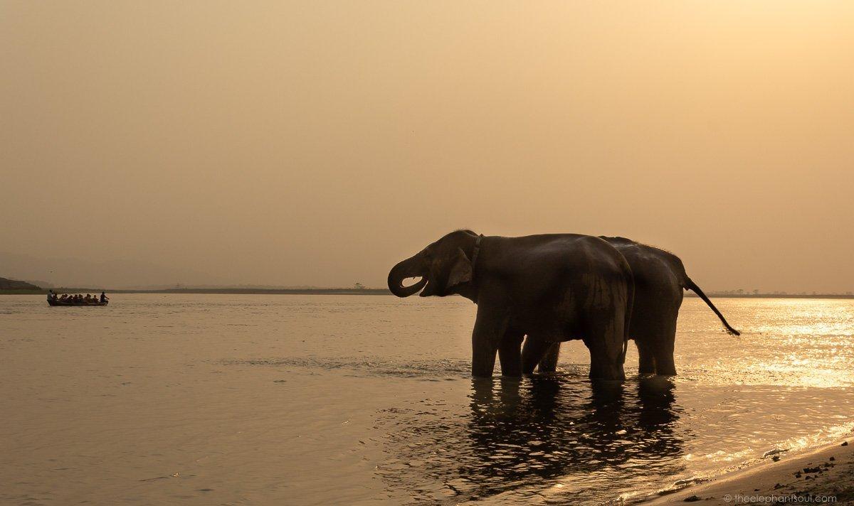 Elephants at Tiger Tops Resort Nepal