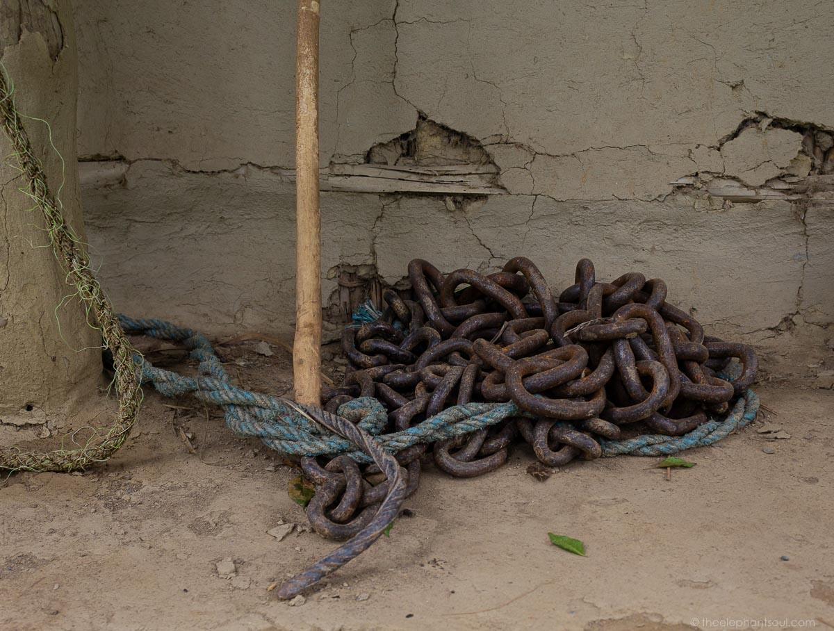 Chains used on captive elephants