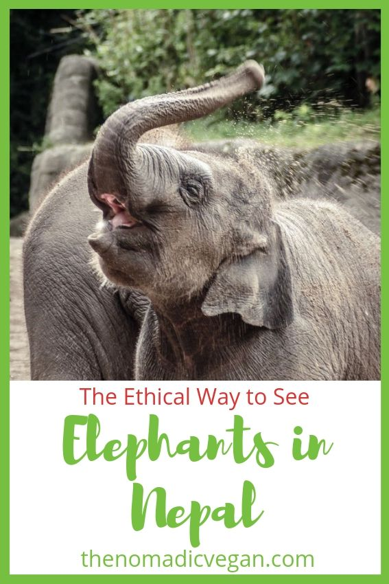 The Ethical Way to See Nepal Elephants