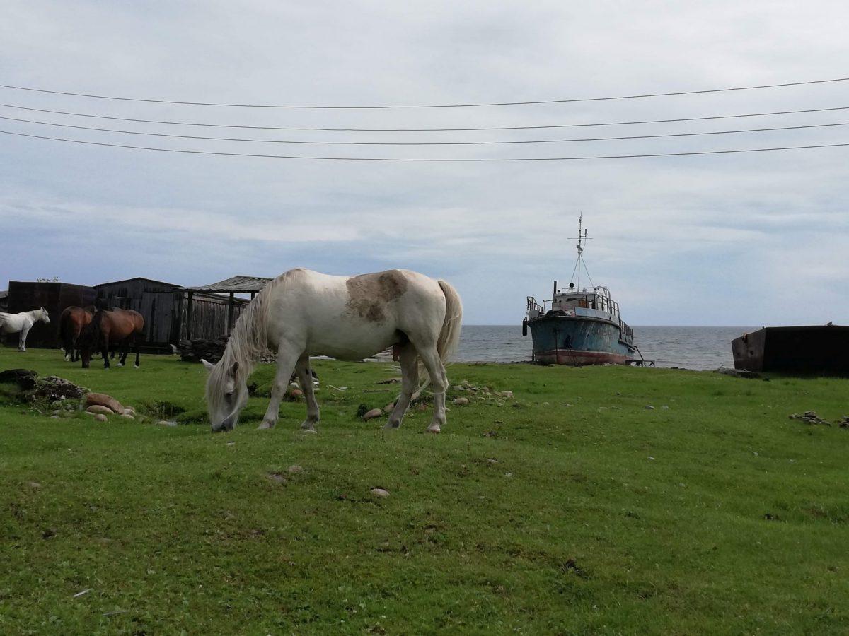 Horse on Lake Baikal in Bolshiye Koty