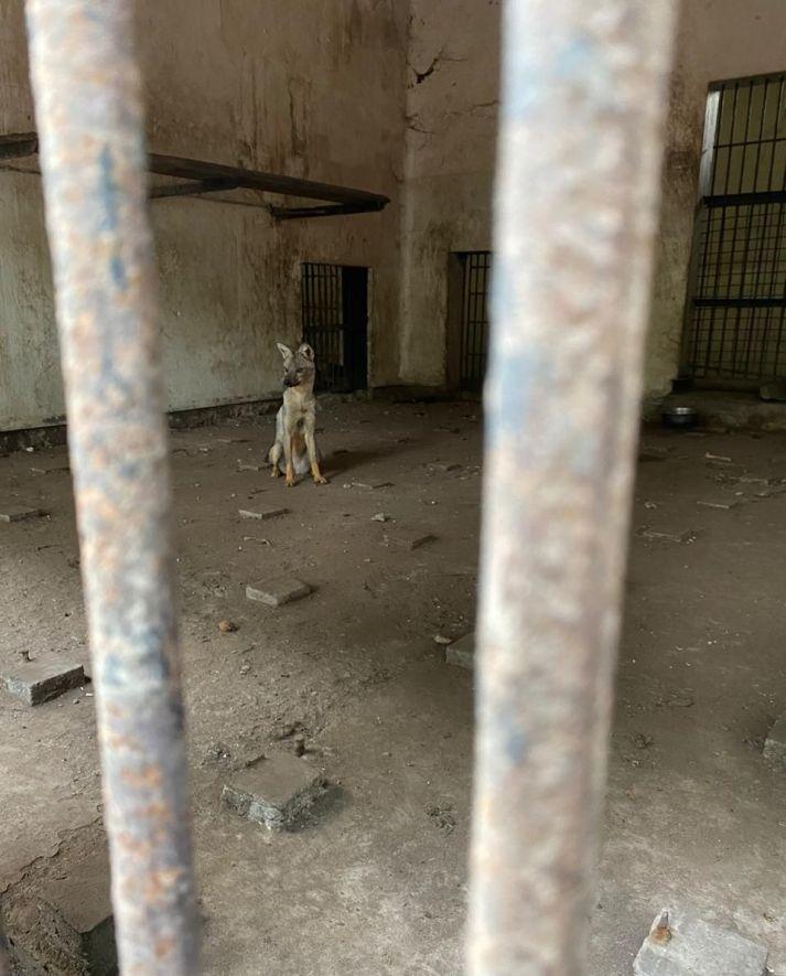 Brazzaville zoo