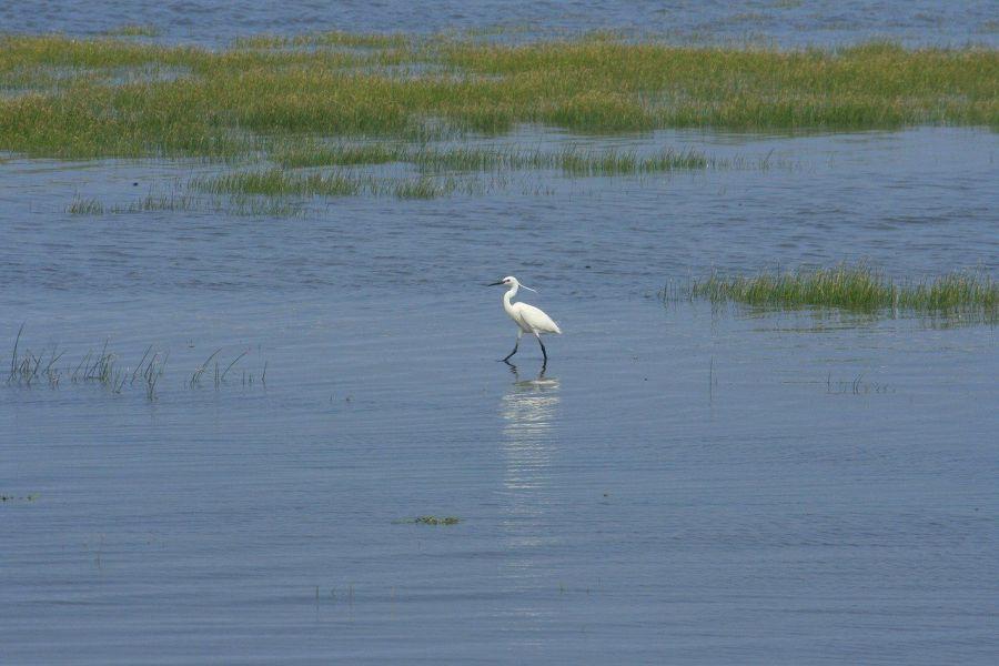Bird life at Gaomei Wetlands