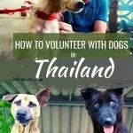 Volunteer in Thailand with Animals