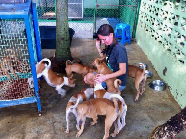 Socialising with rescue dogs