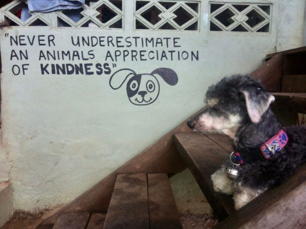 Rescue dog in Thailand