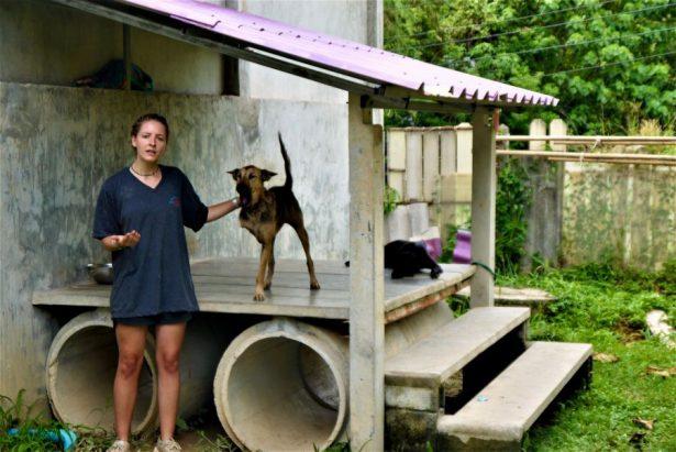 Volunteer leading tour of dog rescue center